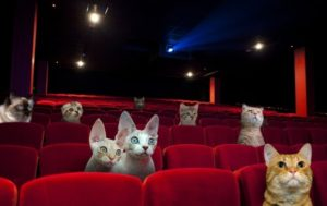 20150414054316-cat-cinema_good